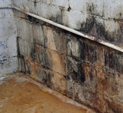 mold damage Saugus ma