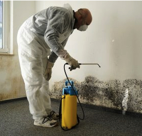 mold cleanup Burlington ma